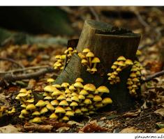 Jesen na Papuku