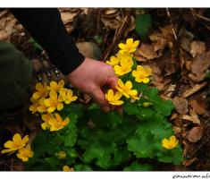 Cvijet...
