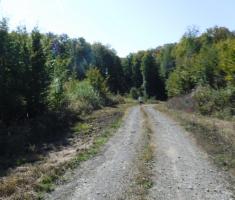 20201010_borovik_trail_073