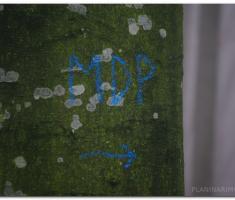 mdp2011_00030