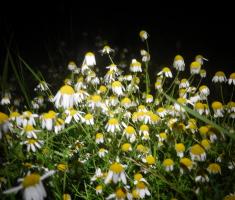 20210612_baranja_night_trail_145