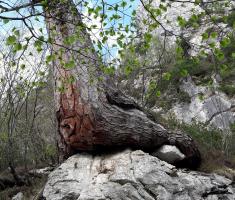 20170513_drazen_smit_slovenija_073