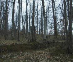 20210314_trail_of_sokol_085
