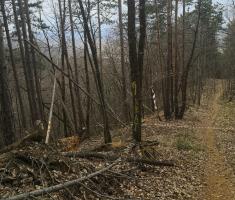 20210314_trail_of_sokol_134