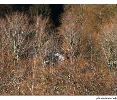 šumarski