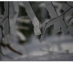 Zimski detalj...