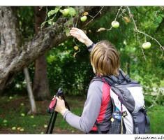 Malo jabuka...