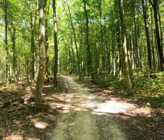 20210821_prvi_sumski_trail_koprivnica_031-jpg
