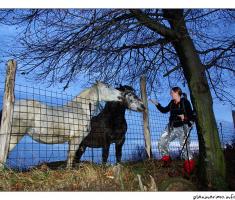 konji...