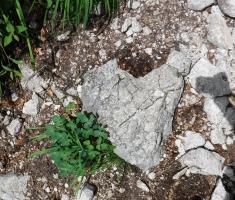20180623_kamnisko-savinjske-alpe_grintovec_034