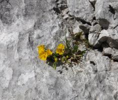 20180623_kamnisko-savinjske-alpe_grintovec_214