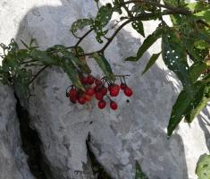samarske_stijene_074