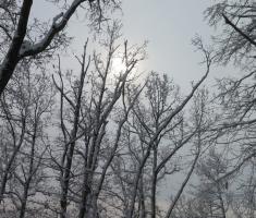 20180225_pozeska_gora_095a