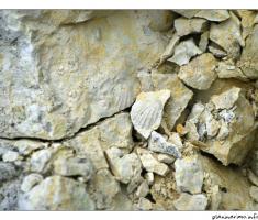 Fosili