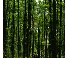 Nepregledna šuma